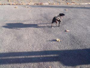 « L'ombre de ton chien » décembre 2013 – (24×36 sur papier baryté, contrecollé sur plaque de Dibond) - photographie © V.Champigny
